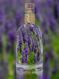lavender-1490788_1280