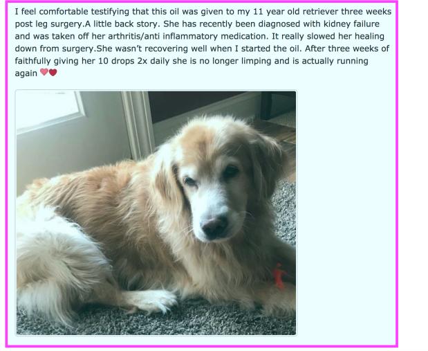testimonial dog 1.png